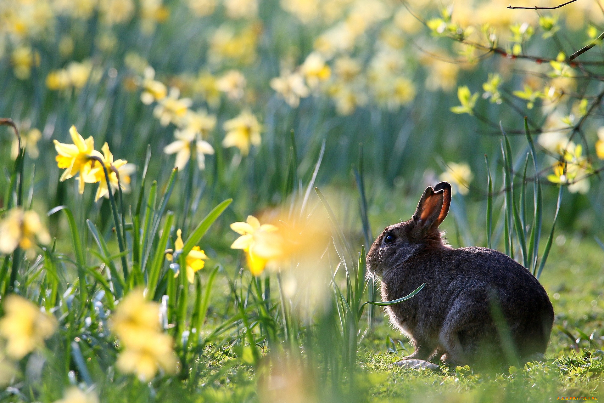 Картинки весна на телефон в хорошем качестве плод становится